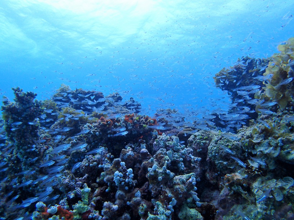 透明な小魚くん達が群れております。(´◉◞౪◟◉)ゥフフフ