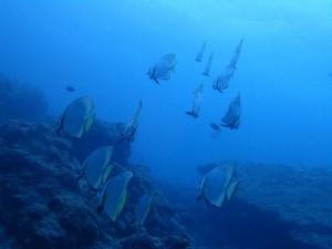 間近で見る魚群を初体験!