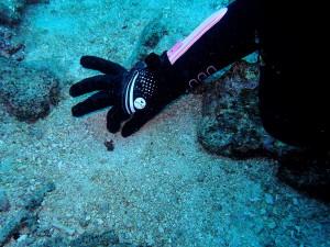海藻で餌付けしちゃいましょwww