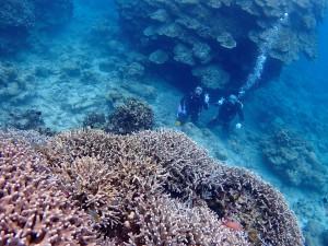 モリモリ珊瑚と遠目にパシャリ♪
